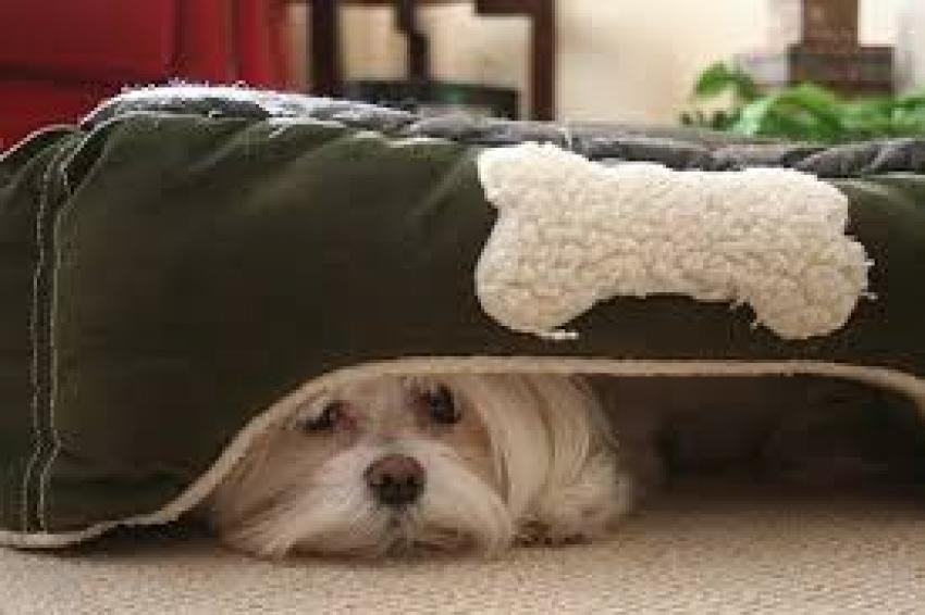 Desensibilizzazione cane: come funziona?