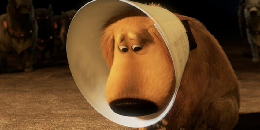 Collare elisabettiano per cani: a cosa serve e come si mette