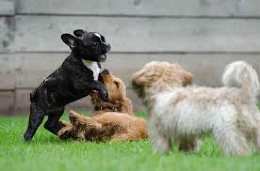 La socializzazione del cucciolo: tempi e modi corretti. VIDEO