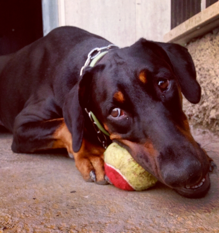 I mezzi dell'apprendimento del cane: i 5 sensi