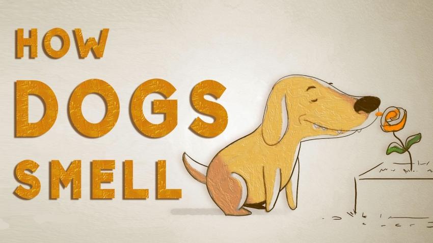 Olfatto del cane: come funziona il suo naso? IL VIDEO