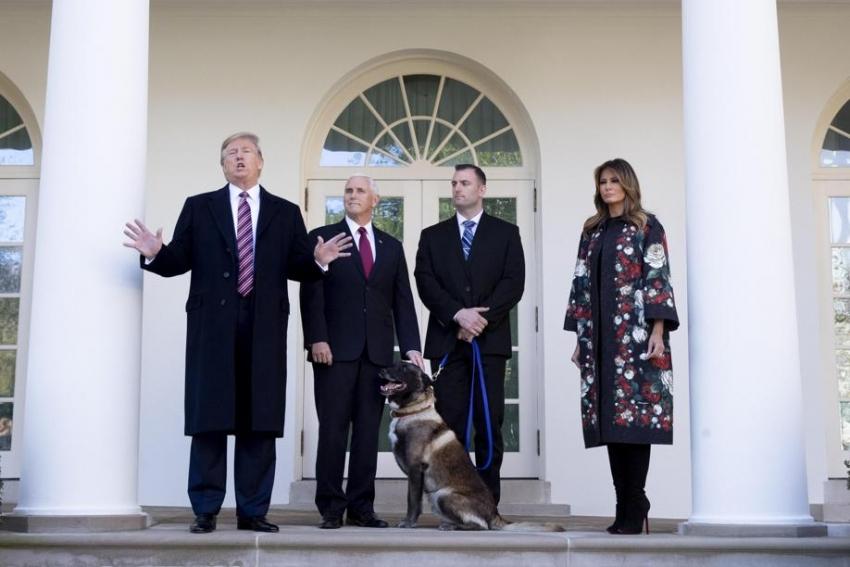 Premiato da Trump il cane che ha catturato il capo dell'Isis