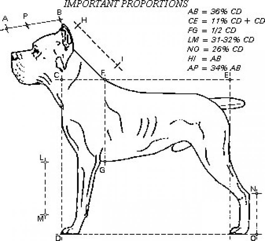 Come misurare il cane - Strumenti e tabella tipo delle misure