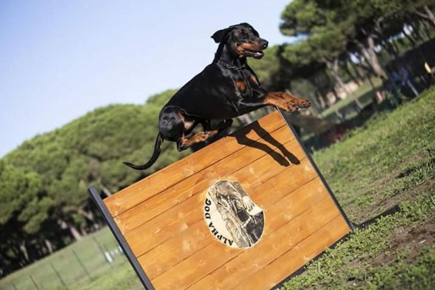 Il contest che fa impazzire gli amanti dei cani: la challenge #quarantenacinofila