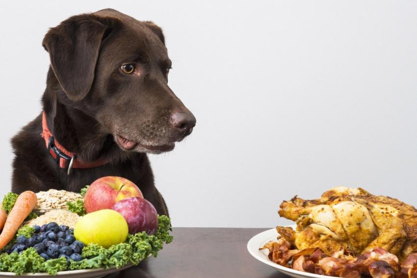 Cani e diete vegetariana e vegana. I rischi