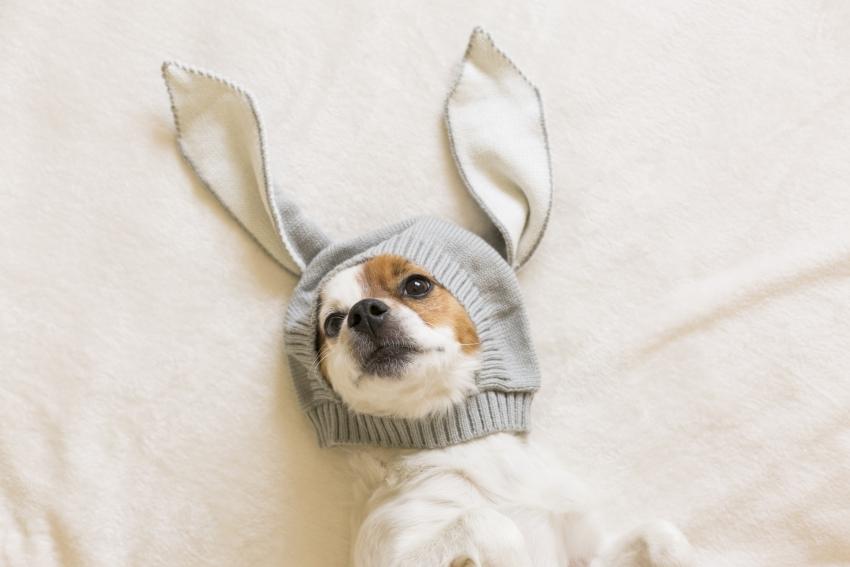 Otite nel cane: i sintomi, le tipologie, le cure e la prevenzione