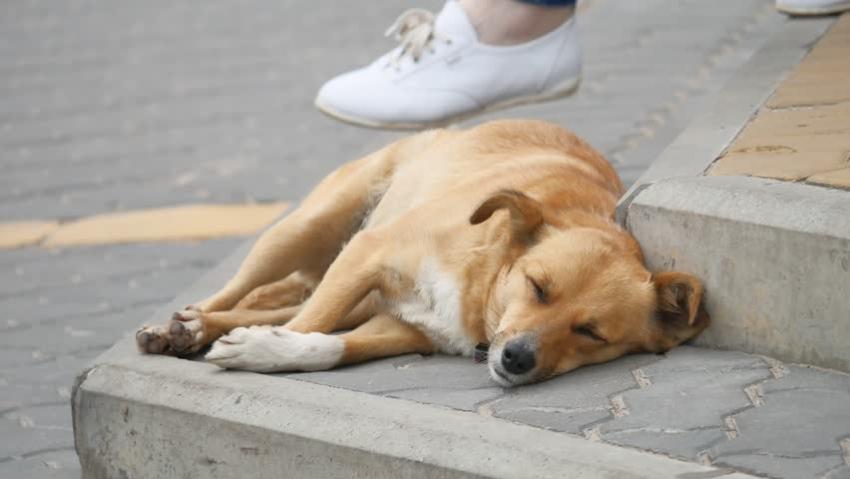 Tbilisi aiuta i cani randagi del dopoguerra
