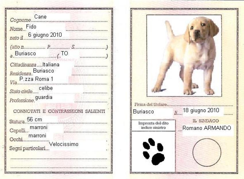 Microchip del cane: costo ed iscrizione Anagrafe Canina