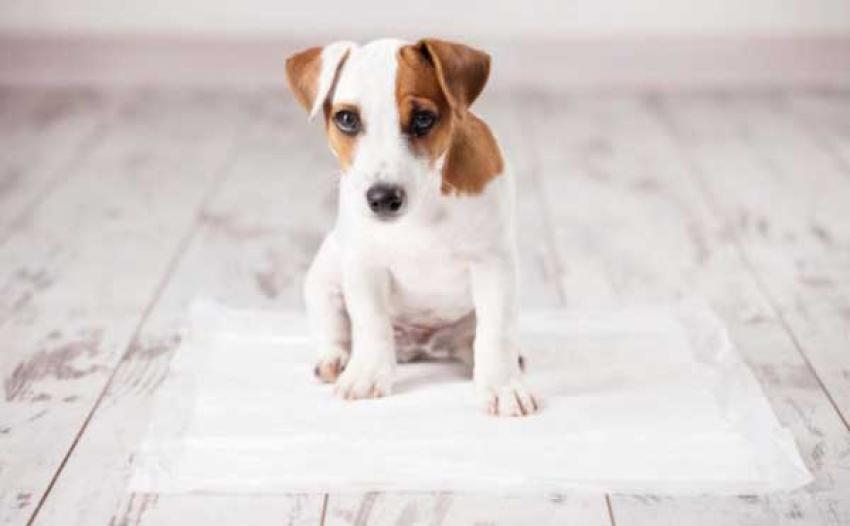Tappetini igienici per cani - A cosa servono e quando utilizzarli