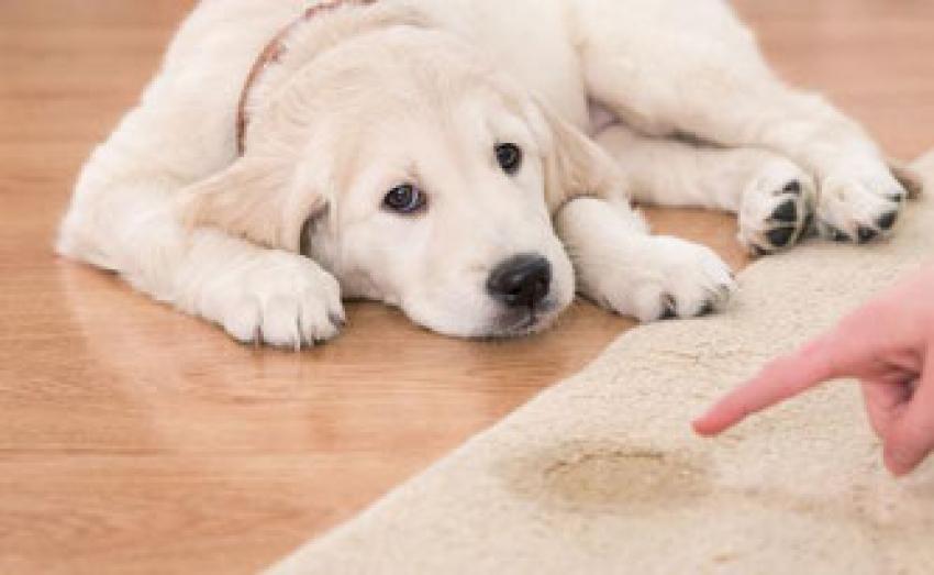 Come insegnare al cucciolo a fare i bisogni fuori casa