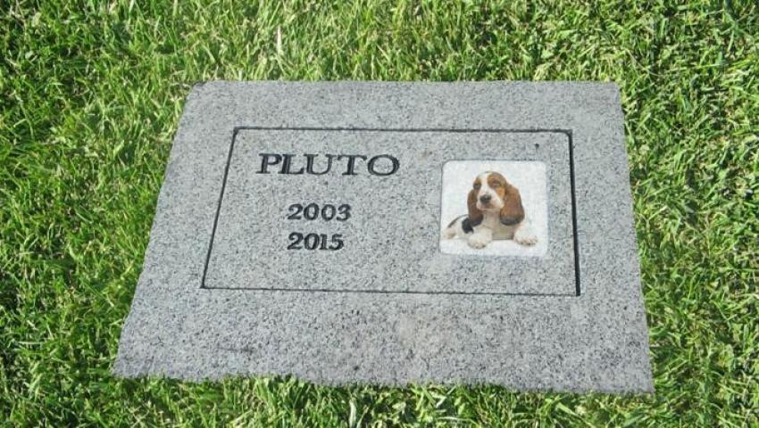 Cosa Fare Quando Muore Il Cane Come E Dove Seppellirlo Ecco Le