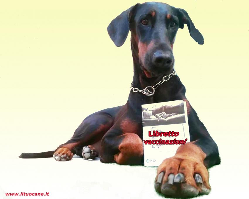 Documenti indispensabili per il cane